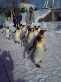 今日の旭山動物園