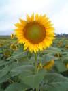 20060816vfsh0017
